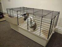 Rabbit - guinea pig indoor hutch
