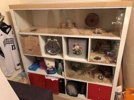 Homemade Gerbilarium Cage (Ikea Kallax) suitable for hamsters, gerbils, rats, degus & other rodents