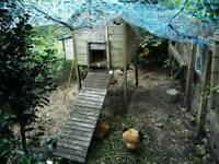 Chicken shed with automatic door opener and four hens