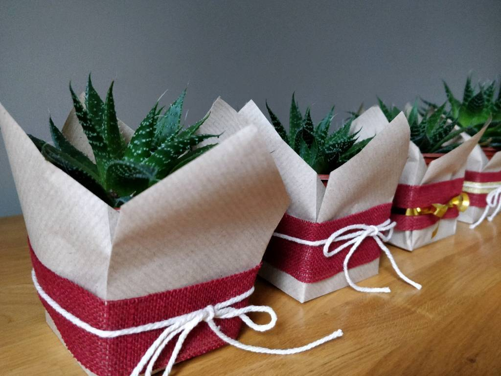 Christmas Succulent Gift.Christmas Gift Succulent Plant Decoration In South East London London Gumtree