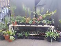 Plants for sale, Newport st Vauxhall, central London, Beaconsfield art gallery courtyard SE116AY
