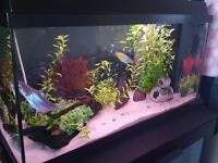 ***REDUCED****110 liter fish tank with loads of accessories and 3 fish