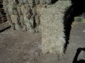 Small bales of 2018 hay for sale.