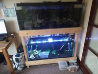 48x18x15 + 42x18x15 Fish Tanks + Double Wooden Stand + 2x External Filters + LOTS MORE
