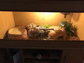 "2yr old female royal python . 3'x18""x18"" tank ceramic light excellent cond."