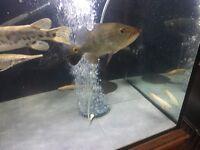 Oddball fish