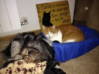 PET FRIENDLY Flat wanted for LONG TERM RENT (21th June on) - around 800 Pounds
