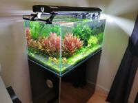 Fish tank 200L Evolution Aqua 900