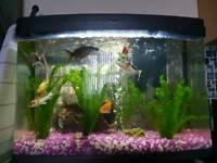 Fish Tank (Inc Filter)