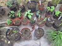 Selection of garden perennial plants