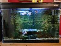 Tropical Fish and 250 litre Aquarium