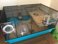 Grey and white hamster for sale with accessories
