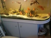 Fish tank BOYU for sale