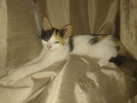 Kitten Ready for Loving home