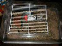 1 male Gerbil with small cage