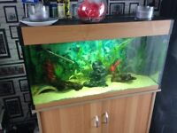 Tropical fish for sale good variety of breeds more pics on request can be sold with or without tank