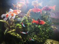 Large aquarium tank including community fish