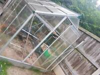 8' x 6' greenhouse for sale