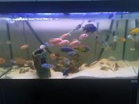 200L fish tank with fish