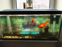4 feet aquarium with gold fish