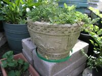 Alpine Garden In Decorative Concrete Container Weymouth
