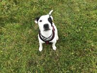 Dog walking service in wiltshire