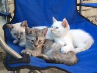 Adorable kittens need new forever homes