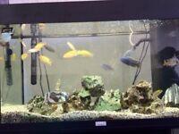 Black Juwel Rio 125 Aquarium with Stand (Reduced)