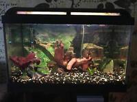 Marina 60l fish tank