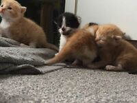 6, 3 week old kittens