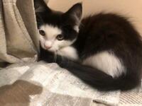 Kitten needing a new home