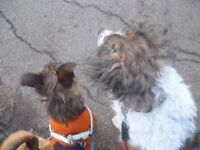 Town centre dog walker/carer,,many years experience in animal rescue & care