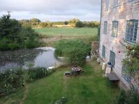 House share in beautiful rural cottage near Langport