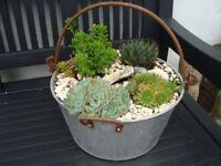 Large Vintage Jam Pan with mature succulent garden.