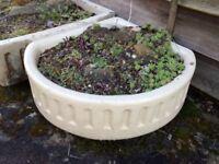 Old ceramic sinks for garden troughs