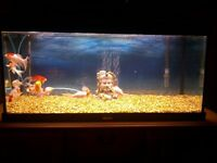 Fish tank full setup with accessories