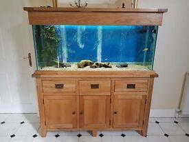 Oak 310l fish tank
