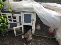 Small chicken coop with 2 young hens