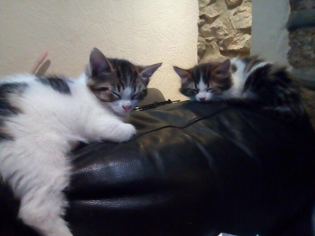Cats Image By Elizabeth Harvey On Annie My Missing Cat Kitten For Sale Beautiful Kittens