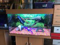 125l Juwel fish tank full set up with stand heater filter 2 xt5 light nice gravel all lid ornament