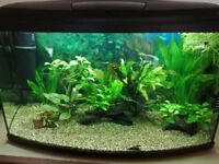 Amano Shrimps and Tropical Ornaments, Plants for Sale