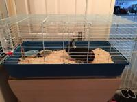 Home wanted for Male Rabbit