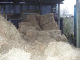 HAY BALES £2.50 CLEMSFOLD SUSSEX AND LOGS £5.00 PER BAG CALL MARK 07800891959
