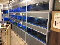 Aquarium Shop Tank Set Up