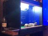 Viv setup + snowbell albino gecko