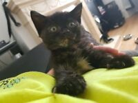 3 beautiful kittens needing a new home