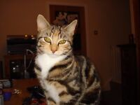 Missing from Ainsworth Lane Bolton BL2,