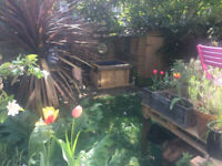 Sunny garden flat for rent in Dalston