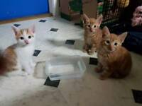 3 beautiful male kittens