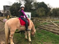 Equine Yard assistant/riding school/apprenticeship